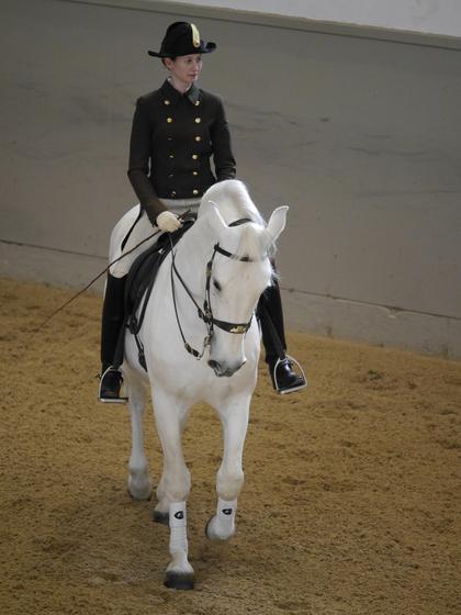 Panasonic GF6 review horse