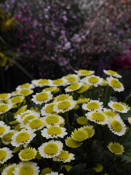 Panasonic GF6 review flowers